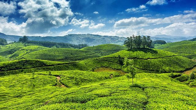 Munnar Tea Plantation by Marvelous Kerala