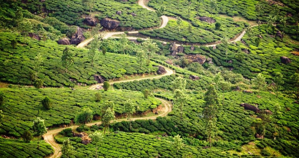 Winding Through a Tea Estate by Liji Jinaraj (Flickr)