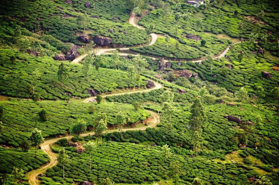 Winding Through a Tea Estate by Liji Jinaraj (Flickr)
